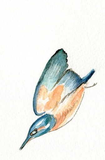 Little kingfisher, I didn't paint you nearly so well as you deserve to be painted.